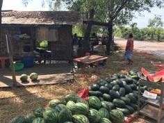 Juicy roadside melons